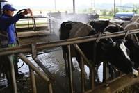 Sau khi sáp nhập GTN, VLC sẽ đầu tư một trang trại bò thịt quy mô khai thác 20.000 con/năm.