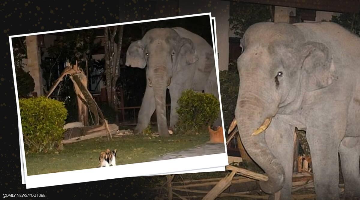 """Vào nhà không xin phép, chú voi nặng hơn 4 tấn suýt bị mèo mướp """"tẩn"""" cho một trận"""