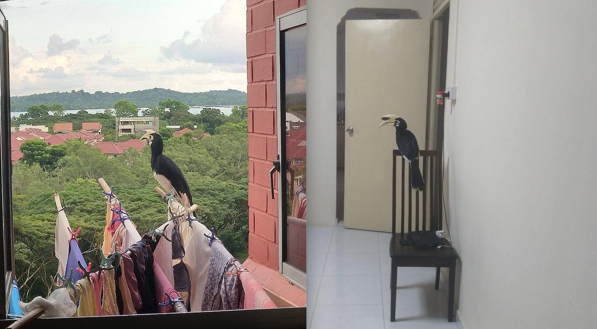 """Đàn chim cực kỳ quý hiếm bất ngờ ghé thăm và món quà """"hết hồn"""" dành cho gia chủ ảnh 4"""