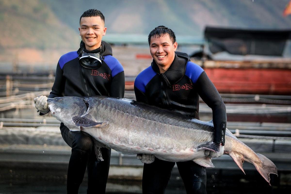 Cá tầm khổng lồ Beluga lần đầu xuất hiện tại Việt nam ảnh 1