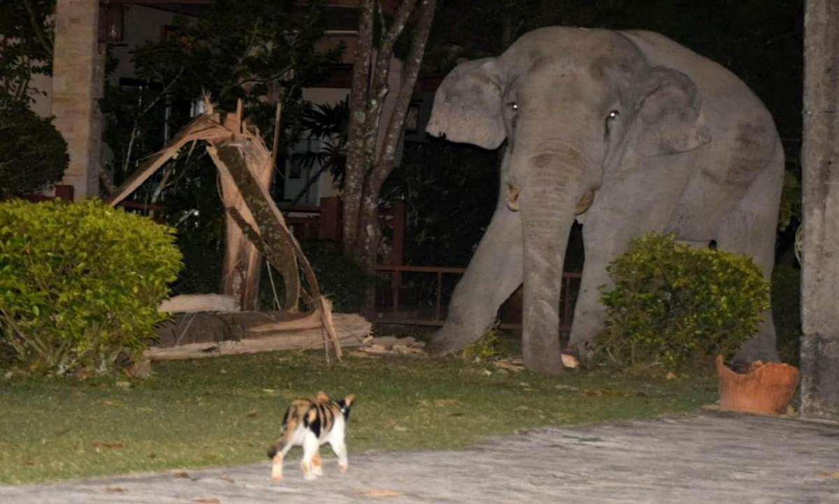 """Vào nhà không xin phép, chú voi nặng hơn 4 tấn suýt bị mèo mướp """"tẩn"""" cho một trận ảnh 4"""