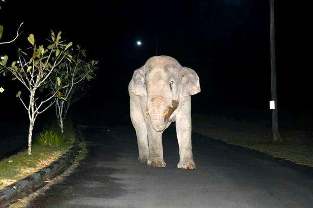 """Vào nhà không xin phép, chú voi nặng hơn 4 tấn suýt bị mèo mướp """"tẩn"""" cho một trận ảnh 1"""