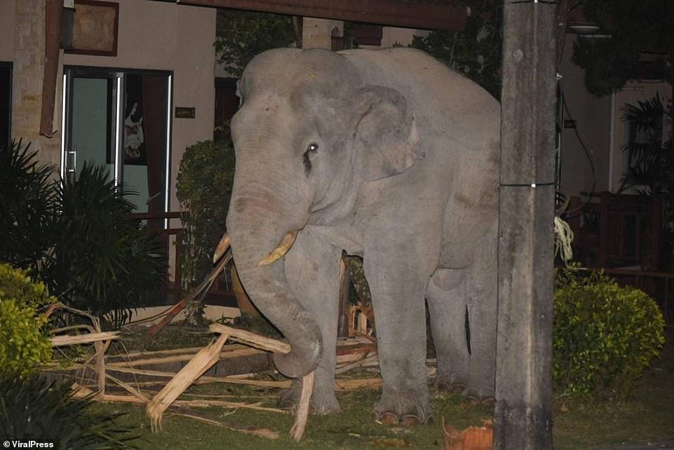 """Vào nhà không xin phép, chú voi nặng hơn 4 tấn suýt bị mèo mướp """"tẩn"""" cho một trận ảnh 3"""