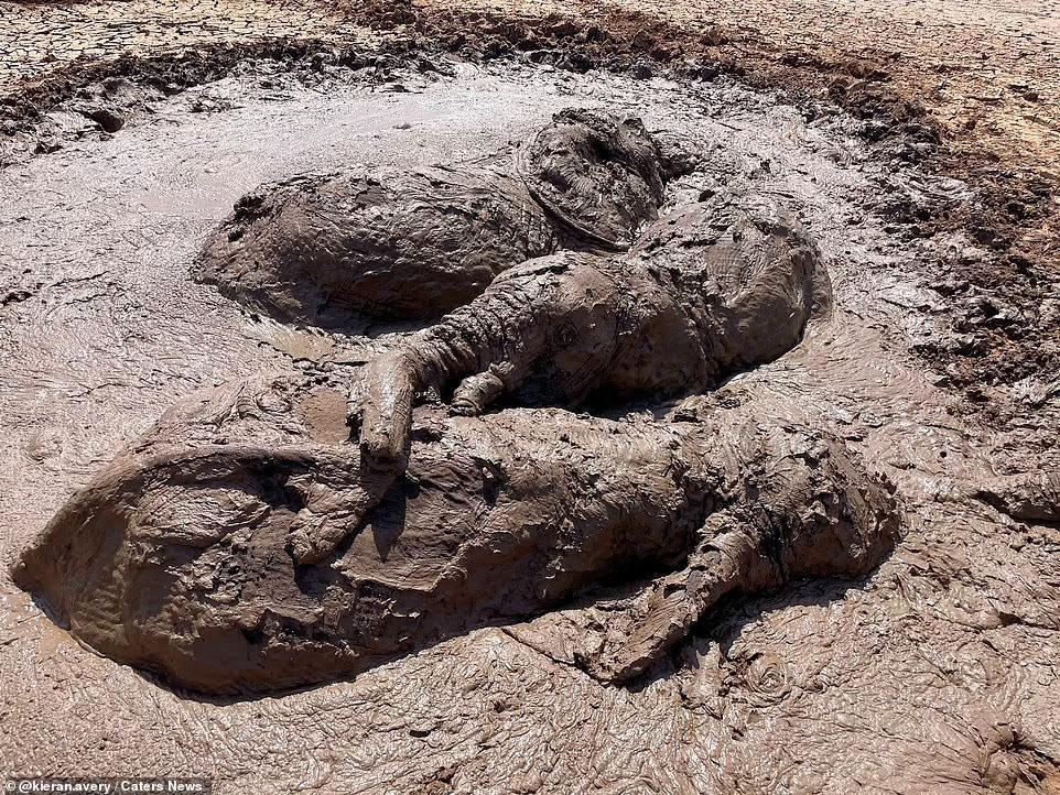 Nhiệm vụ đặc biệt: Giải cứu đàn voi châu Phi to lớn bị mắc kẹt trong đầm lầy ảnh 1