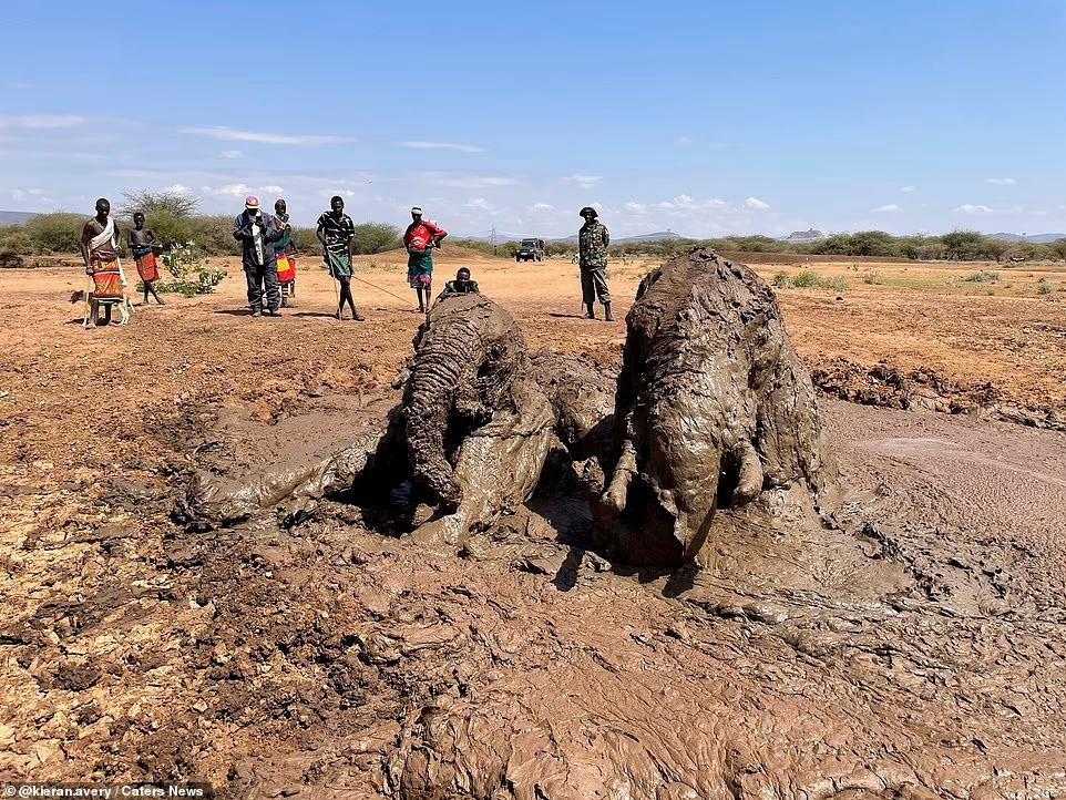 Nhiệm vụ đặc biệt: Giải cứu đàn voi châu Phi to lớn bị mắc kẹt trong đầm lầy ảnh 2