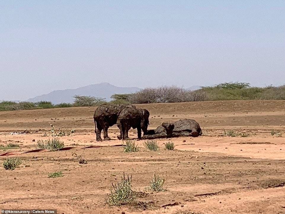 Nhiệm vụ đặc biệt: Giải cứu đàn voi châu Phi to lớn bị mắc kẹt trong đầm lầy ảnh 5