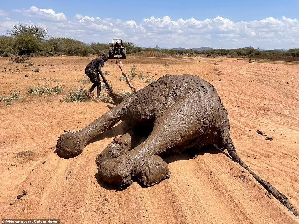 Nhiệm vụ đặc biệt: Giải cứu đàn voi châu Phi to lớn bị mắc kẹt trong đầm lầy ảnh 3