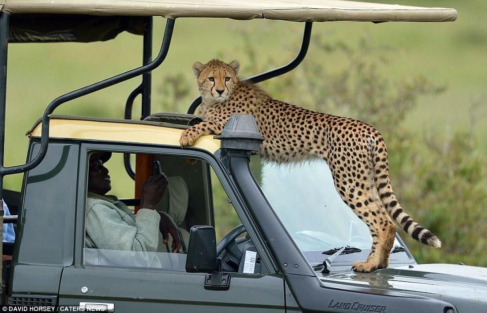 Một pha nhảy xe để làm quen với con người không thể ấn tượng hơn của đàn báo săn ảnh 4
