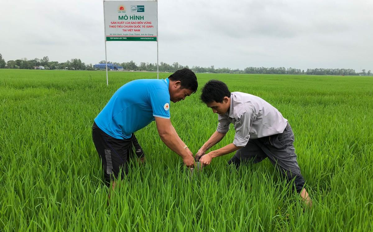 Lộc Trời số hoá nông nghiệp cho mục tiêu trở thành tập đoàn dịch vụ nông nghiệp hàng đầu khu vực ảnh 1