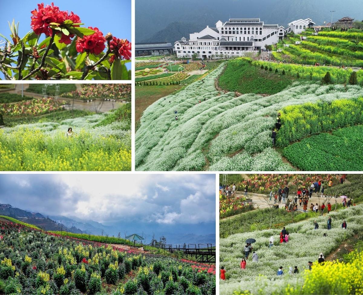 Nửa thập kỷ thắp sáng đỉnh Fansipan, gọi Sa Pa bốn mùa xuân về ảnh 26