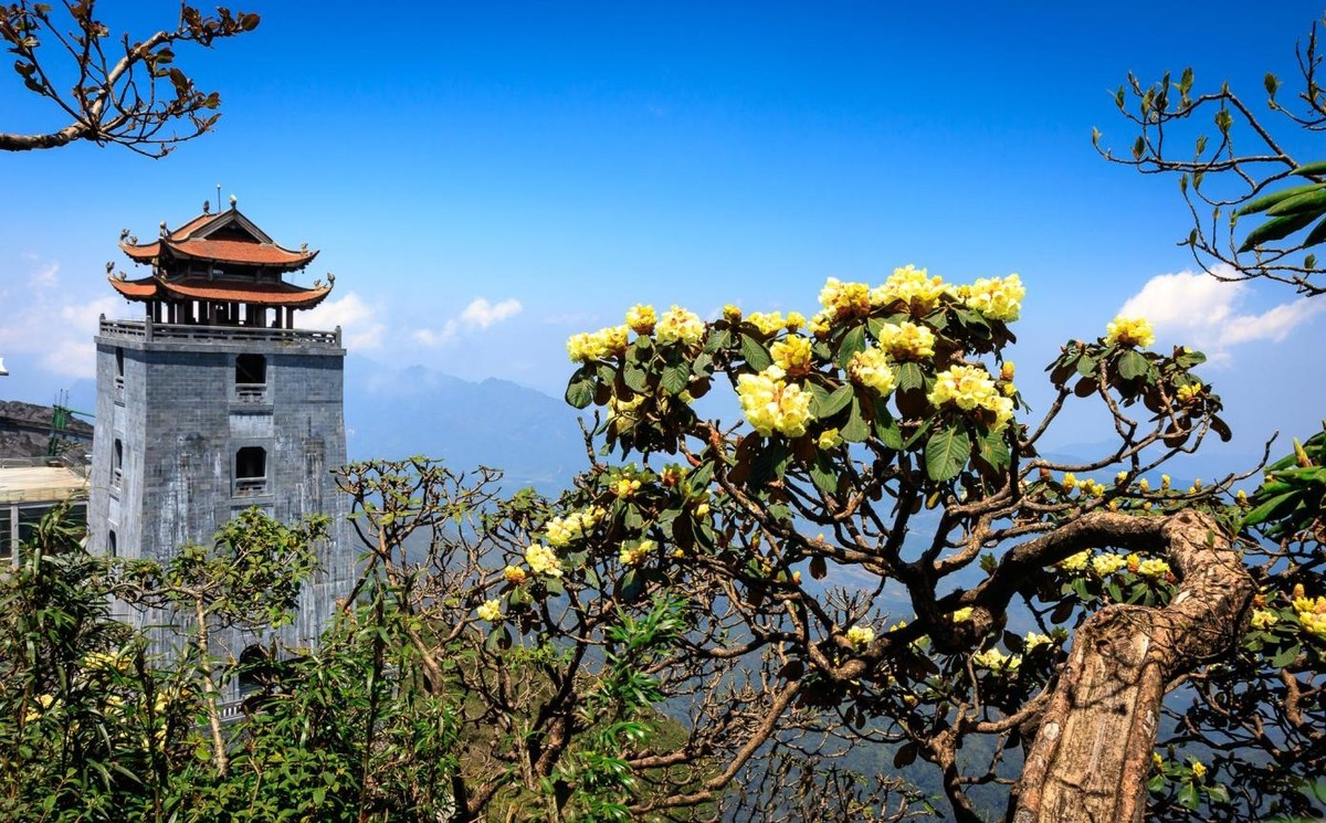 Nửa thập kỷ thắp sáng đỉnh Fansipan, gọi Sa Pa bốn mùa xuân về ảnh 39