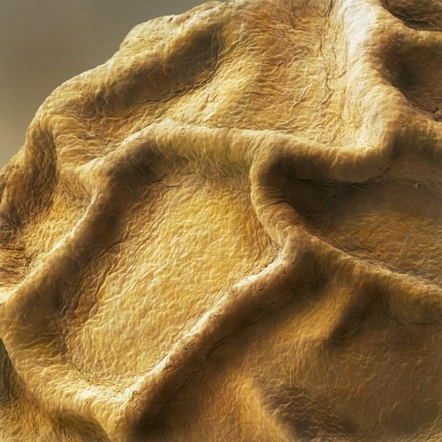 Hình ảnh phóng to của các nếp nhăn mà chúng ta có thể quan sát được bằng mắt thường trên vỏ hạt tiêu khô.