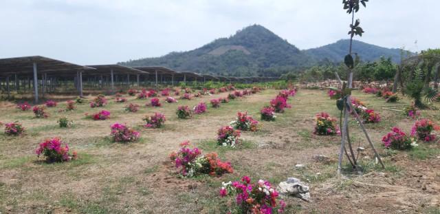 Khẩu vị mới cho du lịch Việt Nam ảnh 1