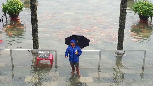 Hàng trăm con cá cảnh ở Hoàng Cung Huế... lên cầu bơi lội! ảnh 2