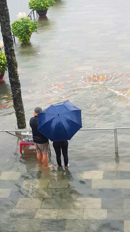 Hàng trăm con cá cảnh ở Hoàng Cung Huế... lên cầu bơi lội! ảnh 3