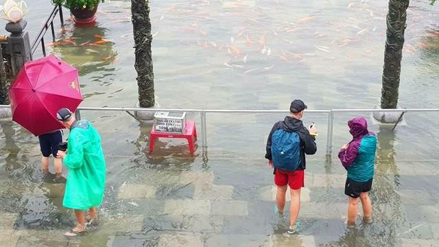 Hàng trăm con cá cảnh ở Hoàng Cung Huế... lên cầu bơi lội! ảnh 8