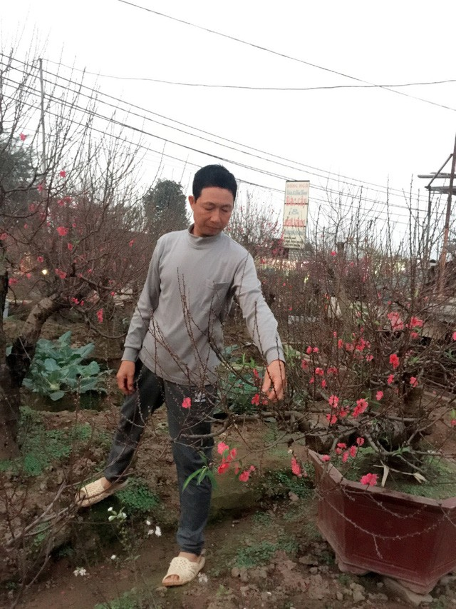 Hoa trúng Tết, nhà vườn dự thu bạc tỷ ảnh 1