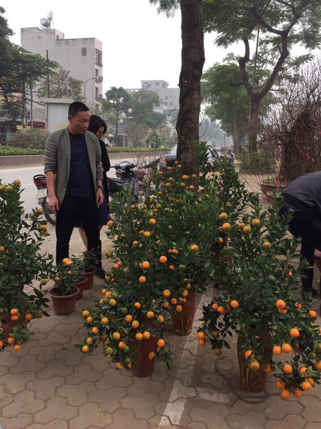 Hoa trúng Tết, nhà vườn dự thu bạc tỷ ảnh 2
