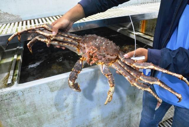 """Dịch corona: Dân buôn hải sản """"điêu đứng"""" vì doanh thu """"lao dốc"""" ảnh 1"""
