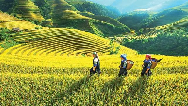 Yên Bái cơ cấu lại nông nghiệp gắn với xây dựng nông thôn mới ảnh 1