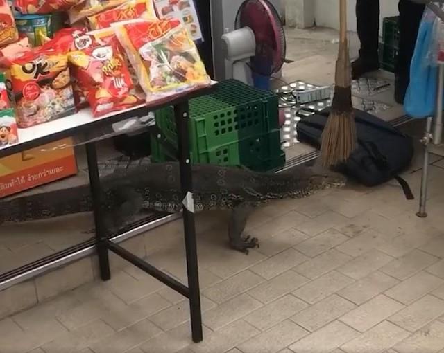 """Cuộc đổ bộ của kỳ đà """"Godzilla"""" vào cửa hàng tiện dụng 7-Eleven ở Thái Lan ảnh 2"""