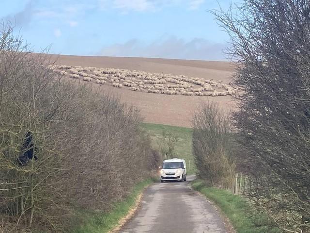 Bí ẩn hiện tượng hàng trăm con cừu đứng bất động, xếp thành hình vòng tròn như đĩa bay của người ngoài hành tinh ảnh 1