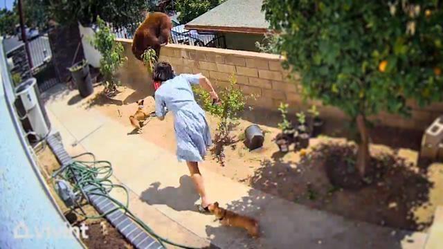 Để cứu chó cưng, cô gái dũng cảm không ngại nguy hiểm đẩy ngã gấu xám ảnh 2