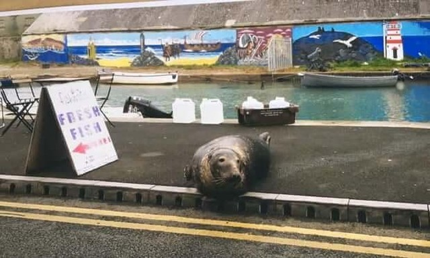 """Vị khách """"chất chơi"""": Sống dưới đáy biển nhưng ngày nào cũng phải trèo lên bờ để đi ăn nhà hàng ảnh 1"""