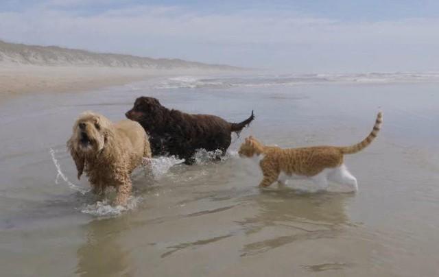 Marlin - con vật có hình hài của loài mèo nhưng lại mang tâm hồn của một chú chó, có khả năng bơi lội cực đỉnh ảnh 3