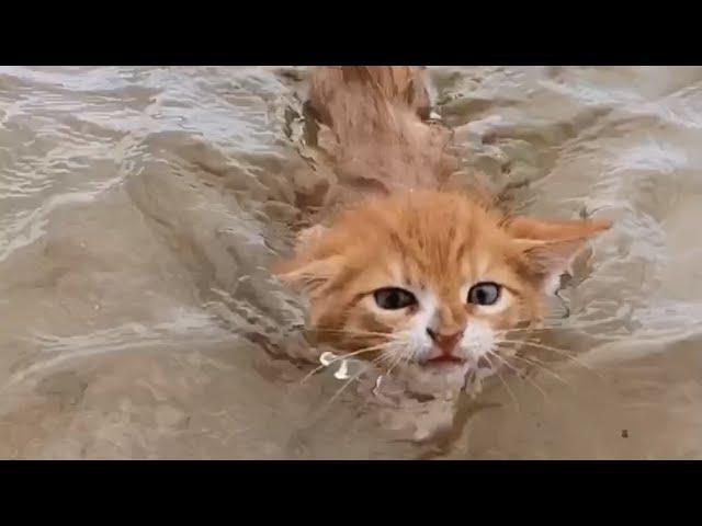 Marlin - con vật có hình hài của loài mèo nhưng lại mang tâm hồn của một chú chó, có khả năng bơi lội cực đỉnh ảnh 4