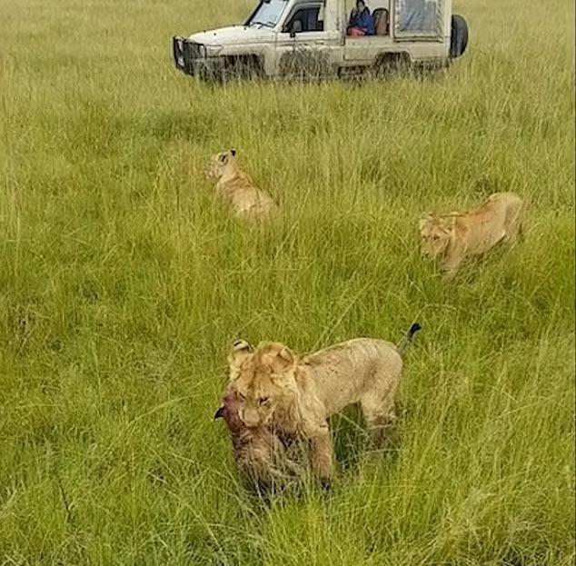Âm mưu lật đổ ngôi vương của sư tử và cái giá phải trả cực đắt của bầy linh cẩu không biết tự lượng sức mình ảnh 1