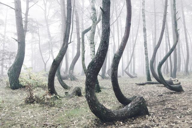 Rừng cây bí ẩn có hình dáng kỳ lạ, chưa từng tìm được lời giải đáp từ các nhà khoa học ảnh 3