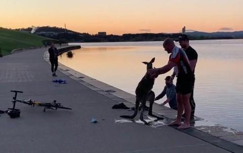 Hành động kỳ lạ của chú chuột túi sau khi được giải cứu ảnh 1