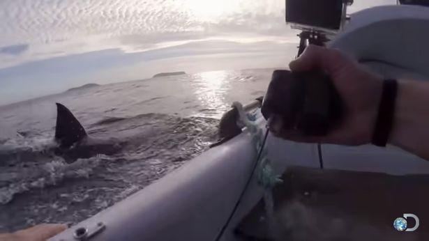 Đoàn làm phim số đen liên tục bị cá mập trắng khổng lồ tấn công ảnh 1