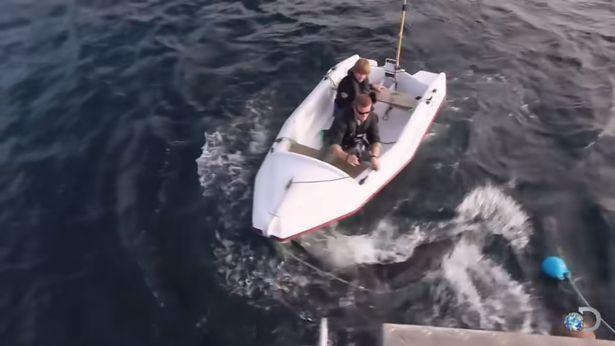 Đoàn làm phim số đen liên tục bị cá mập trắng khổng lồ tấn công ảnh 3