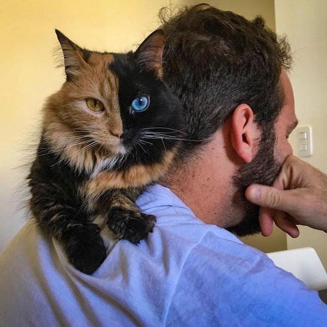 Chú mèo có vẻ đẹp kỳ lạ, khuôn mặt như được dung hợp từ hai con mèo khác nhau ảnh 5
