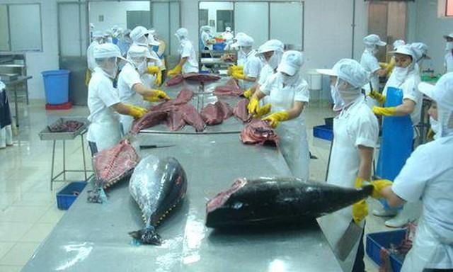 Cuối năm xuất khẩu tôm và cá ngừ đảo chiều nhích nhẹ ảnh 1