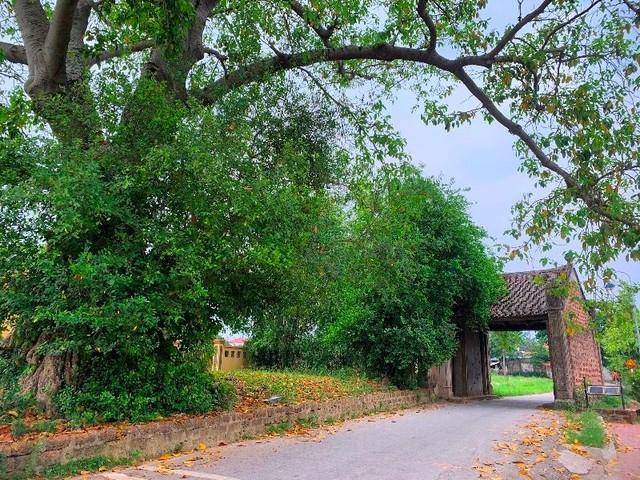 Ngôi làng cổ Xứ Đoài mang đậm dấu ấn thời gian làm say lòng du khách ảnh 1