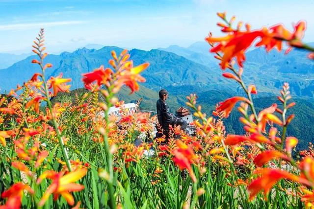 Có một mùa thu gây thương nhớ trên những triền hoa Fansipan ảnh 8