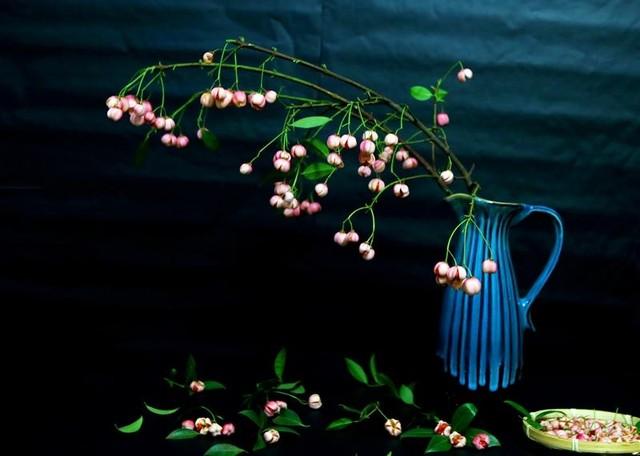 Cành quả lồng đèn yểu điệu, quyến rũ khiến người yêu hoa mê đắm ảnh 1