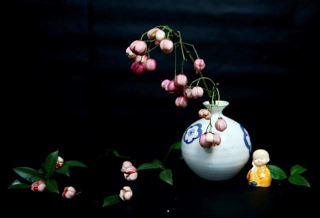 Cành quả lồng đèn yểu điệu, quyến rũ khiến người yêu hoa mê đắm ảnh 10