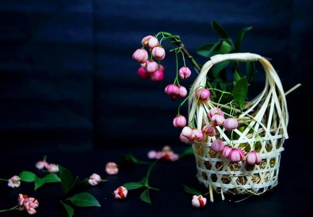 Cành quả lồng đèn yểu điệu, quyến rũ khiến người yêu hoa mê đắm ảnh 11