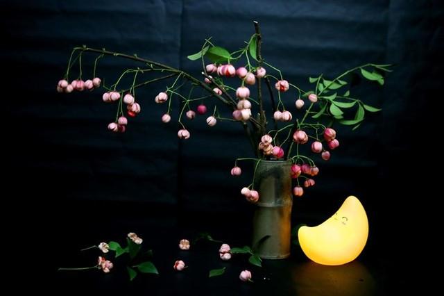 Cành quả lồng đèn yểu điệu, quyến rũ khiến người yêu hoa mê đắm ảnh 12