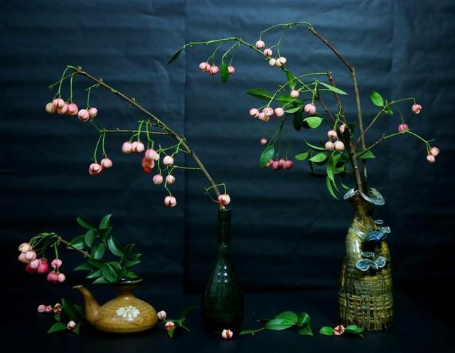 Cành quả lồng đèn yểu điệu, quyến rũ khiến người yêu hoa mê đắm ảnh 13