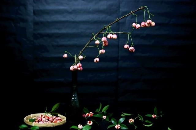 Cành quả lồng đèn yểu điệu, quyến rũ khiến người yêu hoa mê đắm ảnh 2