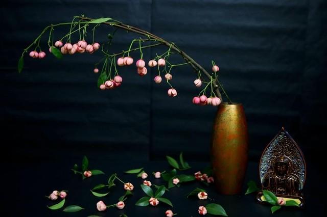 Cành quả lồng đèn yểu điệu, quyến rũ khiến người yêu hoa mê đắm ảnh 3