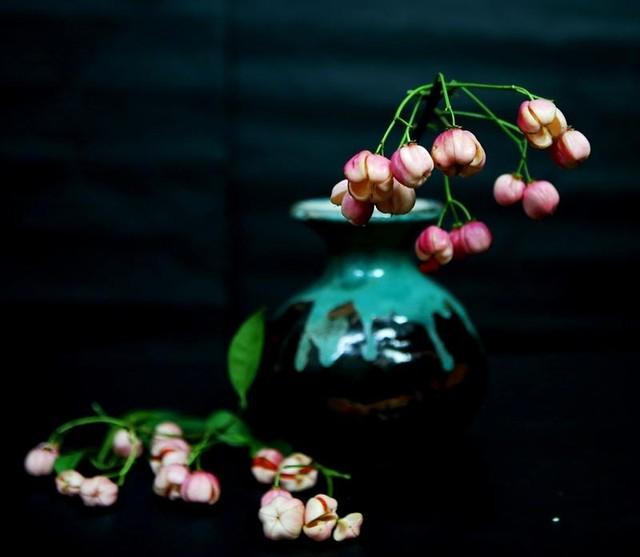 Cành quả lồng đèn yểu điệu, quyến rũ khiến người yêu hoa mê đắm ảnh 6