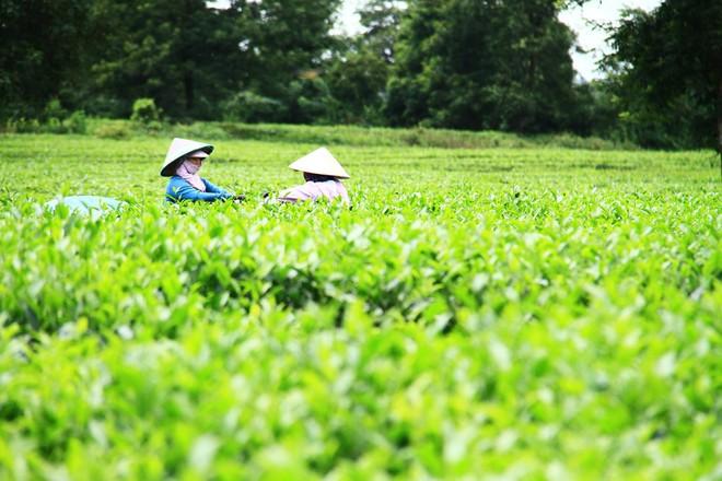 Khoảng 10% dân số các tỉnh triển hai dự án được thụ hưởng lợi ích trực tiếp. Ảnh: Thành Nguyễn.