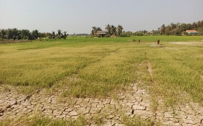 Phó thủ tướng lưu ý theo dõi xuất khẩu gạo trong lúc hạn hán, xâm nhập mặn