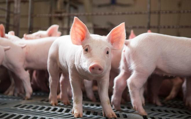 Nông súc sản Đồng Nai (NSS) tạm ứng cổ tức 40% bằng tiền mặt